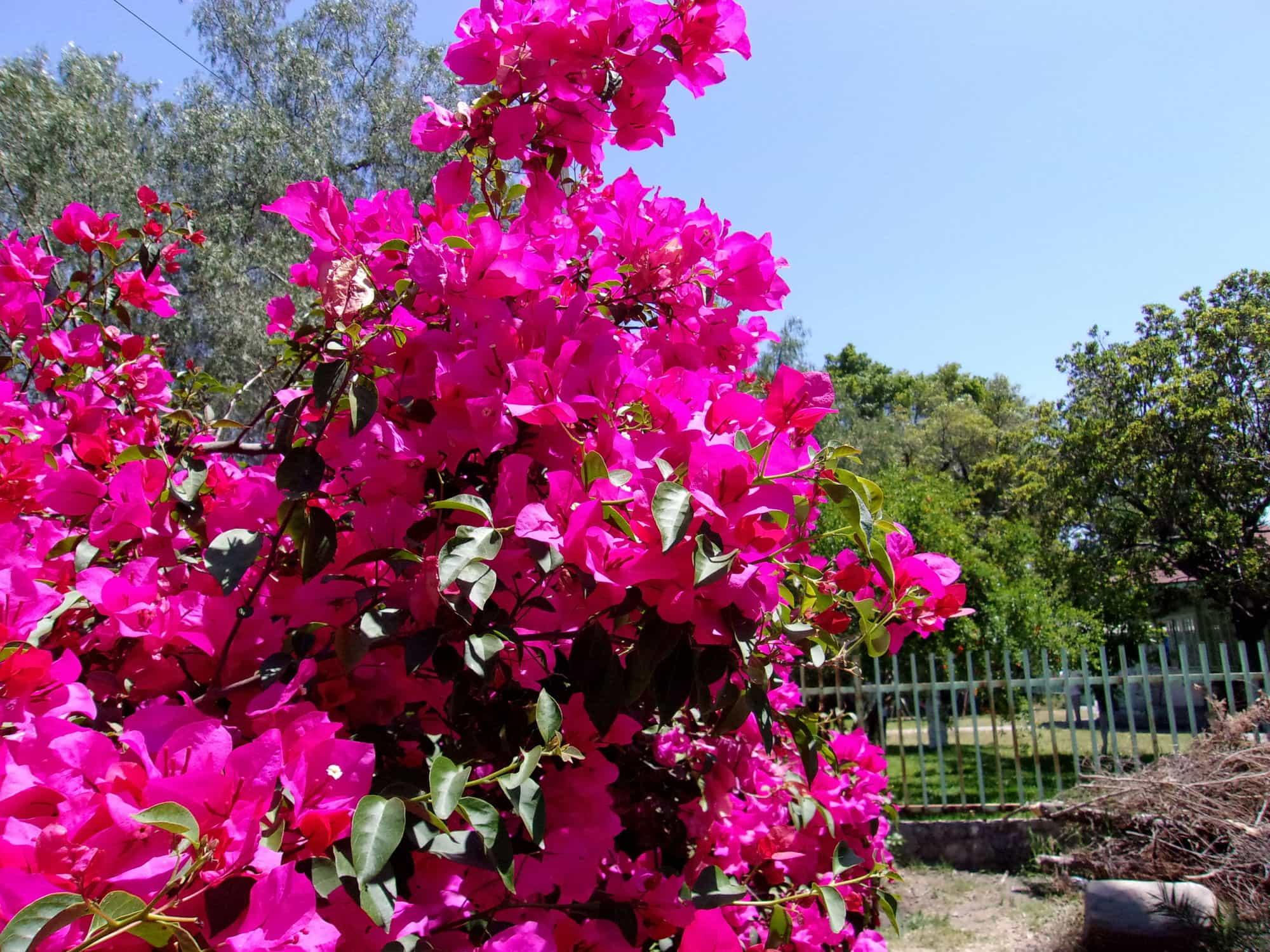 Flores en el jardín de la escuela. Por Emily